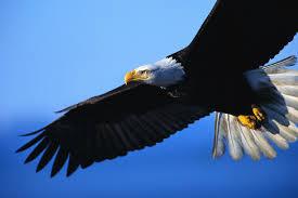 eagle-1424947585443