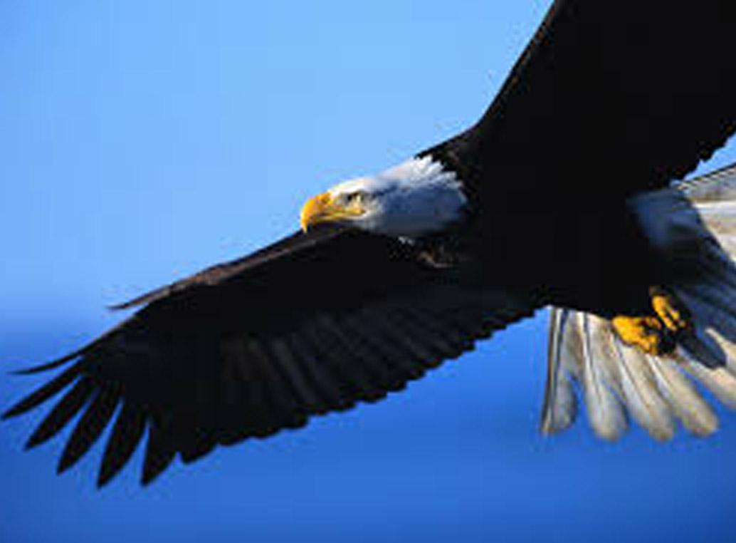 Eagle 1424947585443