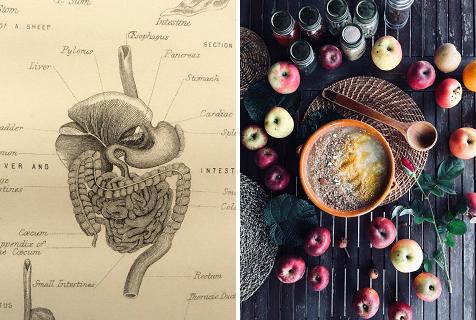 Teoría Nutrición Básica VI. El Sistema Digestivo Del Cuerpo Humano + Compota De Manzana