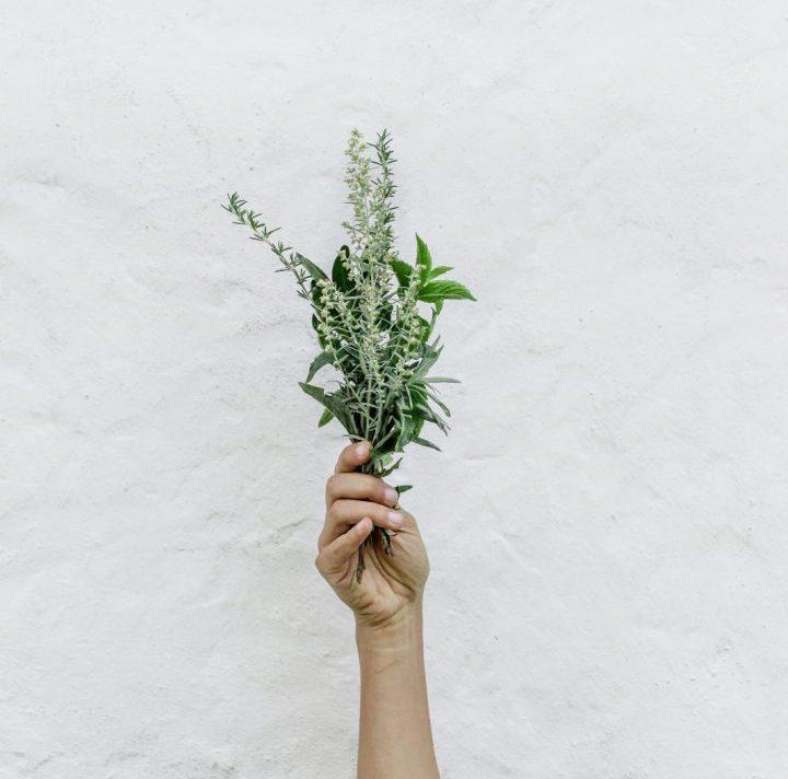 Sigamos Alimentando… La Consciencia, La Creatividad Y La Sostenibilidad.